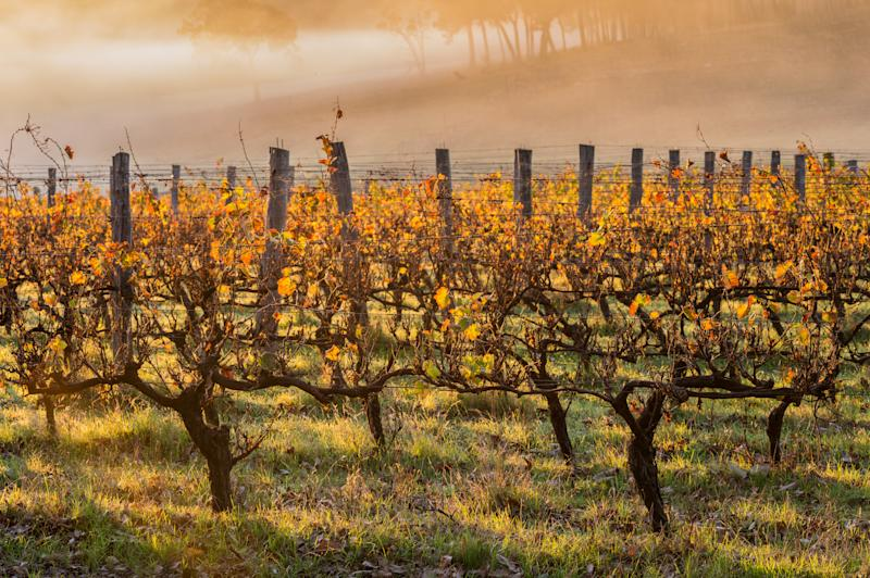 A photo of dawn in the vineyards in Margaret River, Western Australia.