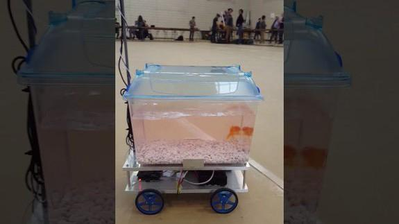 Fish-controlled robot opens up a whole new world