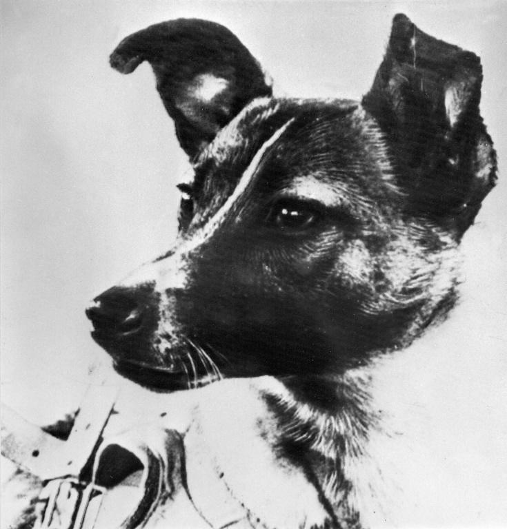 Laika, a former street dog, made history by blasting off in to space on a one-way journey as the first living creature to go into orbit