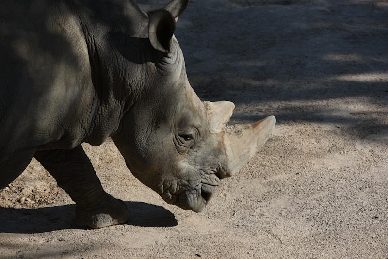 A 2 Year Old Girl Was Hospitalized After Falling Into Rhinoceros Yard At Florida Zoo