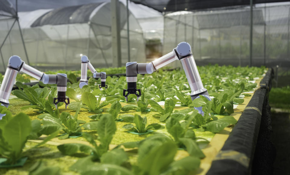 Smart farming agricultural technology and smart arm robots are harvesting hydroponics vegetables, Organic agriculture concept.