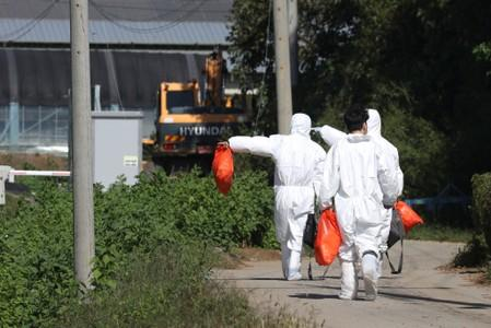 Quarantine officials wearing protective gear walk near a pig farm involved in African swine fever in Yeoncheon