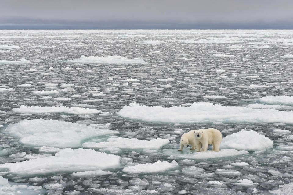 """""""Right now, we are facing a man-made disaster of global scale"""", Attenborough said. .Source: Getty"""