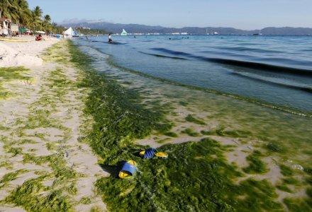 A view of a seashore partly covered with moss is seen at Boracay in the Philippines April 23, 2018. REUTERS/Erik De Castro