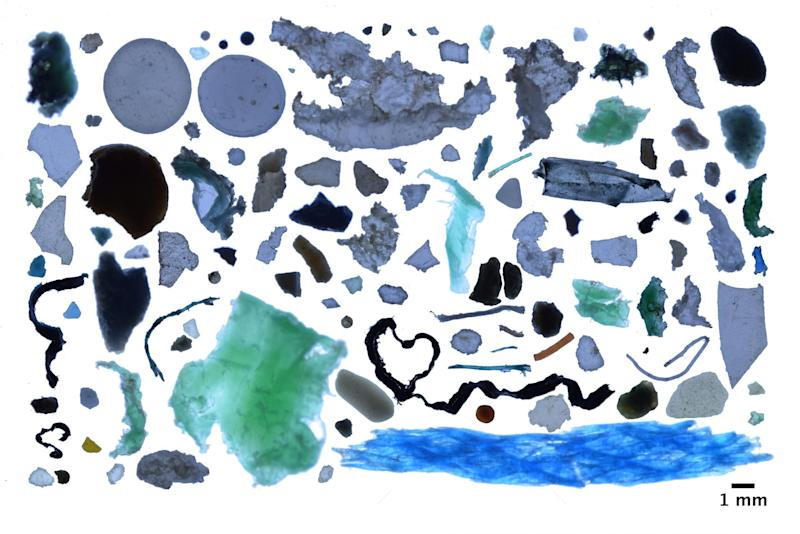 A collection of plastic rubbish found in the Arctic: Andres Cozar
