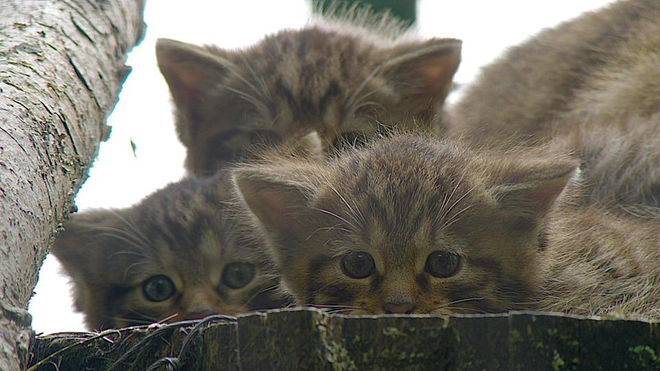 <p>An estimated 2.6 million cats are not mircochipped in the UK </p>