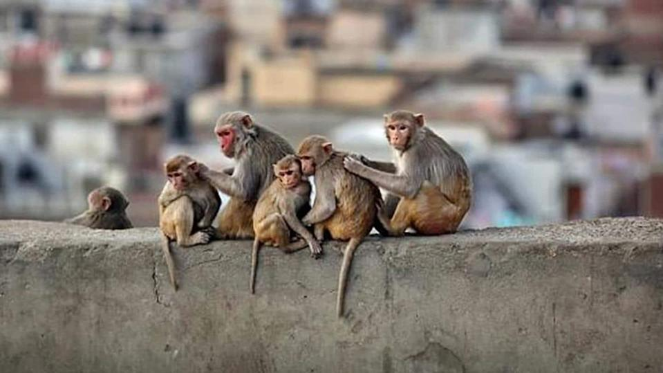#HealthBytes: Everything you should know about monkey B virus
