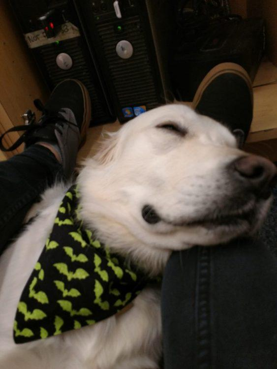 picture of a dog applying pressure therapy to someone with anxiety