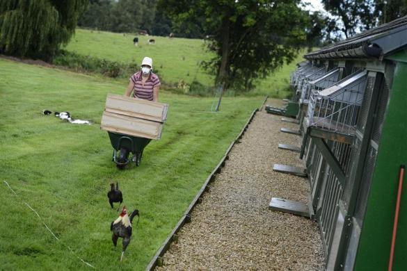 Boxed racing pigeons are prepared for loading for the One Loft race at Birtsmorton, central England August 25, 2012.