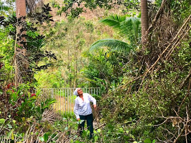 <p>Mercedes Mercado surveys the damage from Hurricane Maria to her farm in Hatillo, Puerto Rico. (Photo: Caitlin Dickson/Yahoo News) </p>