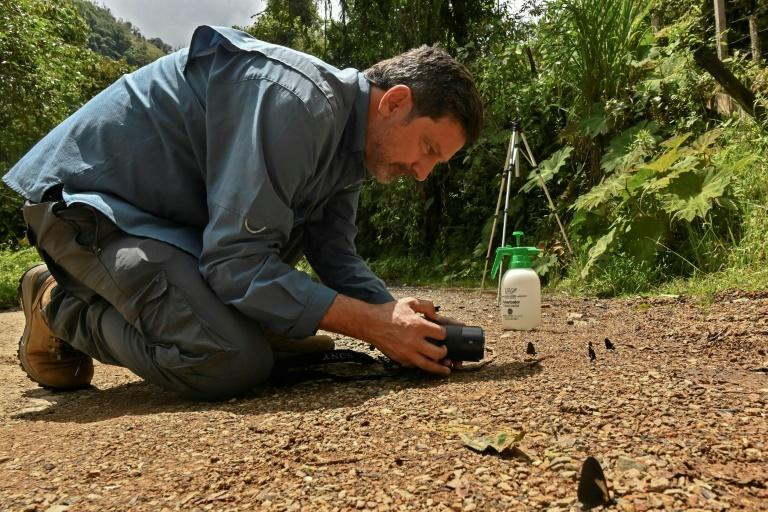 Juan Guillermo Jaramillo says he has taken photographs of 1,500 different species of butterflies, almost half the number of varieties there are in Colombia (AFP/JOAQUIN SARMIENTO)