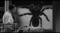"""<p><strong><em>Tarantula!</em></strong></p><p>A giant spider escapes from a scientific research laboratory, attacking the people of a remote Arizona town.</p><p><a class=""""link rapid-noclick-resp"""" href=""""https://www.amazon.com/Tarantula-John-Agar/dp/B072BZ9BCC/?tag=syn-yahoo-20&ascsubtag=%5Bartid%7C10055.g.29120903%5Bsrc%7Cyahoo-us"""" rel=""""nofollow noopener"""" target=""""_blank"""" data-ylk=""""slk:WATCH NOW"""">WATCH NOW</a></p>"""
