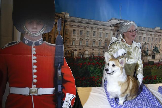 """A Pembroke Welsh Corgis breed stands at a """"Queen Elizabeth"""" themed demonstration booth during a press conference for the upcoming 139th Annual Westminster Kennel Club Dog Show in New York January 21, 2015. REUTERS/Shannon Stapleton (UNITED STATES - Tags: ANIMALS SOCIETY)"""