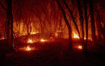 An inmate firefighter from the Trinity River Conservation Camp uses a drip torch to slow the Fawn Fire burning north of Redding, Calif. in Shasta County, on Thursday, Sept. 23, 2021. (AP Photo/Ethan Swope)
