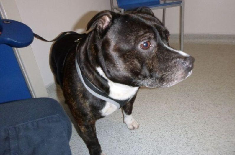 <strong>The dog was found tied up insideSacred Heart Church.</strong> (Photo: RSPCA)