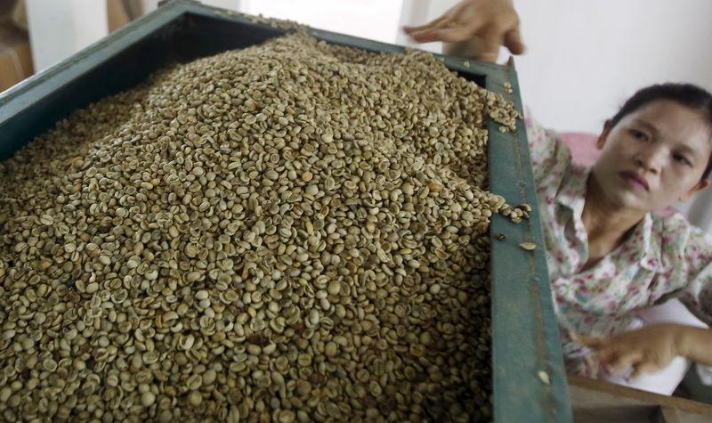 Woman places coffee beans into a machine to sort the beans by size at a coffee factory in Hanoi
