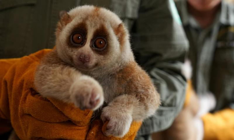A study has found the protein that causes cat allergies is strikingly similar to the venom of the slow loris.