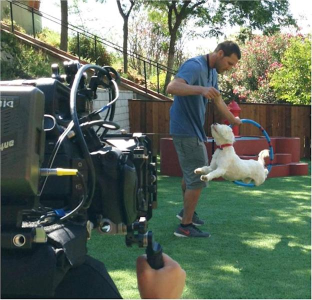 "In this Aug. 14, 2013 photo provided by CBS Entertainment, Animal expert Brandon Mcmillan, host and animal trainer of the show ""Lucky Dog"" trains Willie, a Tibetan Terrier McMillan rescued rescued from a Los Angeles County shelter. McMillan swoops into animal shelters across the U.S., rescuing untrained and unadoptable dogs. Then, back at his training facility known as the Lucky Dog Ranch, he trains them for a lucky family to adopt them. Mcmillan will rescue, train and place 22 dogs in 22 weeks for CBS's 'Lucky Dog,"" which airs Saturday, at 9:30 a.m. EDT. (AP Photo/Bryan Curb, CBS Entertainment)"