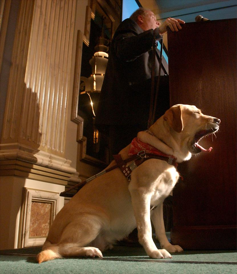 Guide dog Roselle yawns as its owner Michael Hingson speaks at the North Shore Animal League Americas Lewyt Humane Awards Luncheon January 9, 2002 in Garden City, NY. Roselle received an award for leading Hingson down 78 floors from the World Trade Center on September 11. (Photo by Spencer Platt/Getty Images)