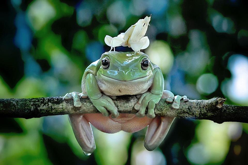 <p>I wish I was half as calm as this frog at any given time. </p>