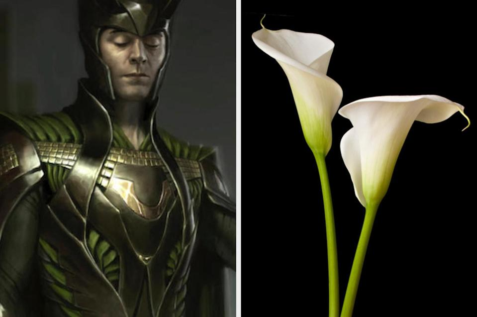 Close-up on illustration of Loki with a collar that is smooth and curved like a lily flower