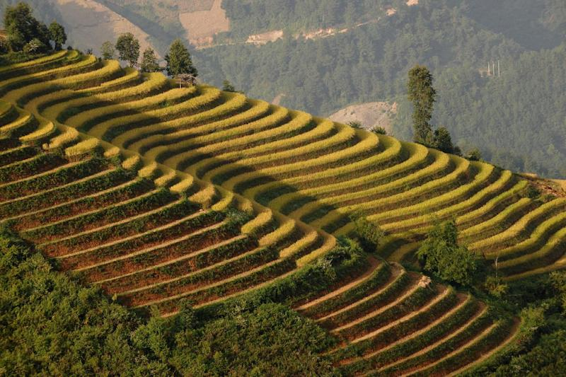 Rice terraces are bathed in late afternoon light in the mountainous district of Mu Cang Chai, Vietnam, on October 23, 2012 (AFP Photo/Hoang Dinh Nam)