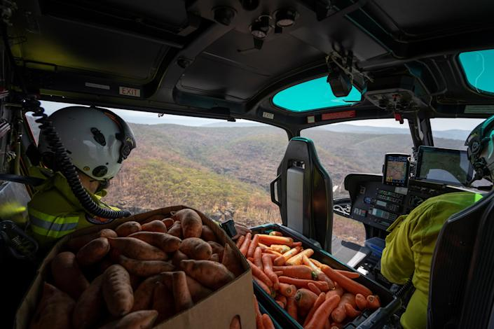 NSW's DPIE staff prepare carrot and sweet potato air-drop around Wollemi National Park