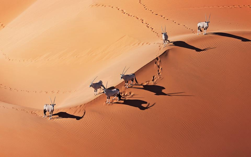Namibia won't be removed from the green list after all - Getty