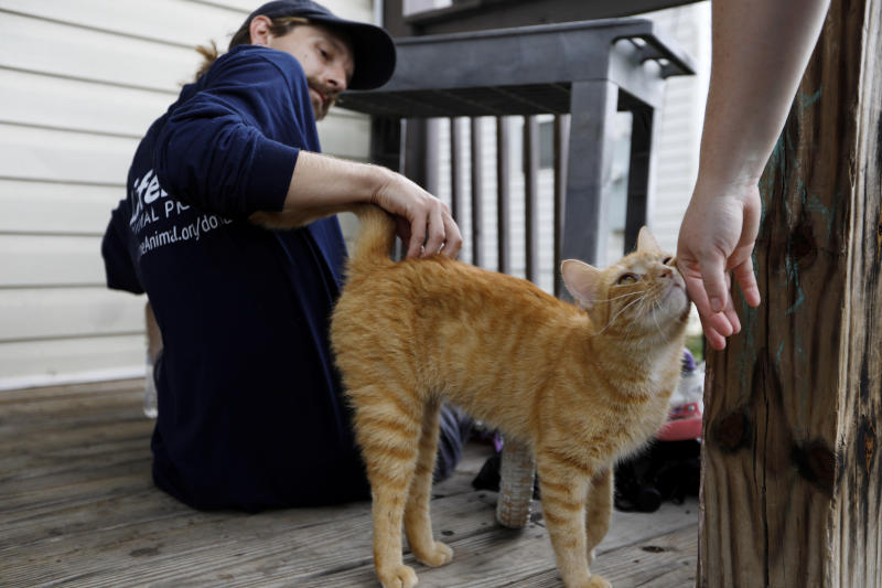 In this Tuesday, Aug. 27, 2019 photo, Brandon Jordan pets a cat while conducting door-to-door outreach for LifeLine Animal Project's Pets for Life program in Atlanta. Jordan is a community outreach coordinator who visits mostly low-income neighborhoods to explain the program's free services, such as pet supplies and vaccinations. (AP Photo/Andrea Smith)