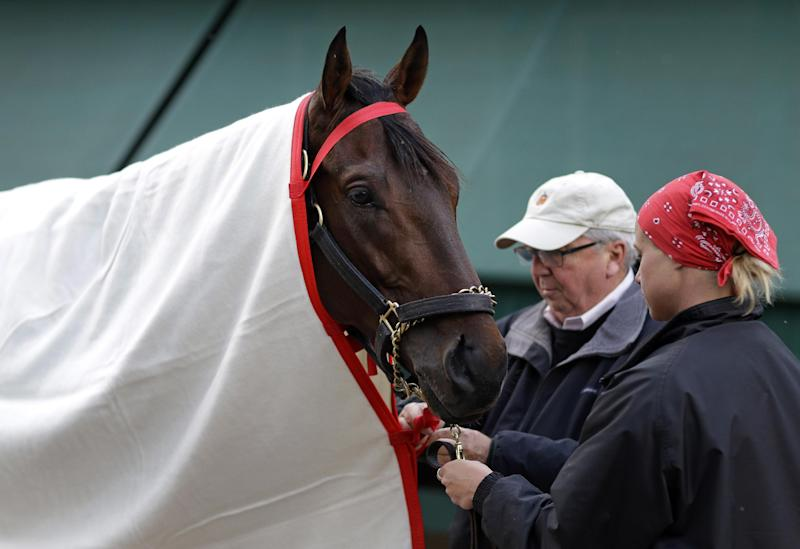 Trainer Shug McGaughey and exercise rider Jennifer Patterson tie a blanket on Kentucky Derby winner Orb after a workout at Pimlico Race Course in Baltimore, Wednesday, May 15, 2013. The Preakness Stakes horse race is scheduled to take place May 18. (AP Photo/Patrick Semansky)