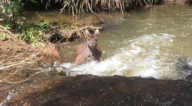 Jackson said the roo seemed to be threatened. Source: Caters / Jackson Vincent