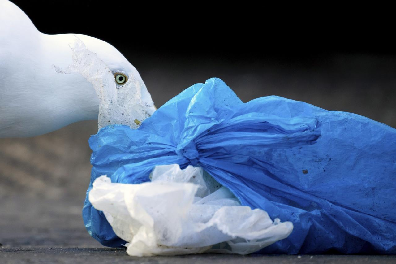 <p>Gideon Knight, from Essex, who won runner-up in the human impact on animals category with an image of a sea gull eating rubbish from a plastic bag </p>