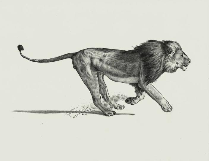 "<p>The artist behind who created this detailed drawing is simply listed as ""Candace from Pennsylvania."" Check out more work, comments, and news articles on the <a href=""https://www.facebook.com/pages/Cecil-the-Lion/1634967960077848?fref=photo"" rel=""nofollow noopener"" target=""_blank"" data-ylk=""slk:Cecil the Lion community Facebook page"" class=""link rapid-noclick-resp"">Cecil the Lion community Facebook page</a> – which already boast 26,000 fans. (Credit: <a href=""https://www.facebook.com/1634967960077848/photos/pb.1634967960077848.-2207520000.1438719804./1636901643217813/?type=3&theater"" rel=""nofollow noopener"" target=""_blank"" data-ylk=""slk:Facebook/CeciltheLion"" class=""link rapid-noclick-resp"">Facebook/CeciltheLion</a>)</p>"