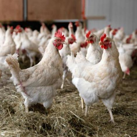 Newly implemented rules will change the way we process chicken in the U.S.