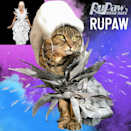 <p>Hopefully RuPaul herself will invite this fierce feline on the show soon. </p>