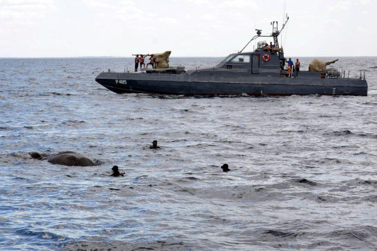 A handout photo made available by Sri Lanka Nave media unit shows Sri Lanka Navy divers trying to tie a rope around an elephant who had strayed away into the open sea and trying to stay afloat off the East coast of the Island, 12 July 2017. After being initially spotted by the crew of a fast attack craft of the East Naval Command about eight Nautical miles off the coast of kokkuthuduwai, Kokilai, the elephant was safely pulled ashore with the help of another fast attack craft and two Cedric boats and the close watch of Wildlife Personnel. Further action was taken over by the Wildlife Authority after being safely landed ashore. Sri Lanka Navy rescue elephant strayed away to the open sea, Kokkuthuduwai - 12 Jul 2017
