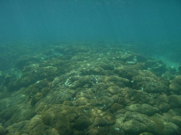 World's Northernmost Coral Reef Discovered in Japan