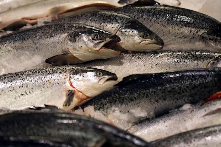 AquAdvantage Salmon may be raised only in land-based, contained hatchery tanks in two specific facilities in Canada and Panama (AFP Photo/Joel Saget)