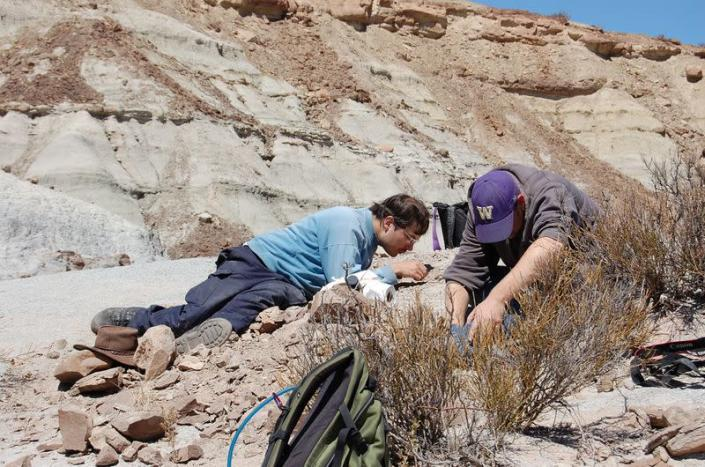 Scientists excavate the remains of a Triassic Period reptile in Argentina in this undated handout photograph