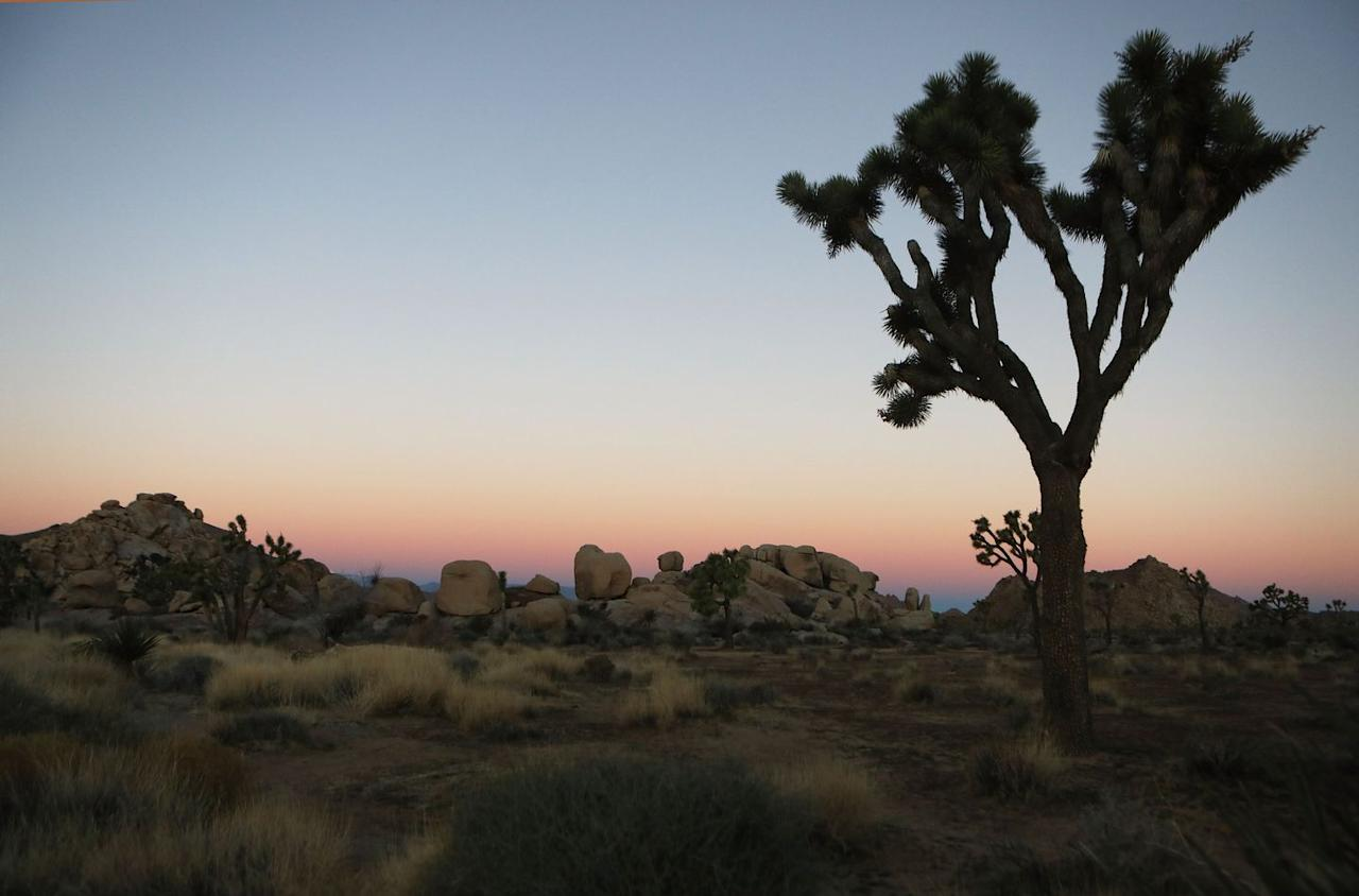 <p>The colorful desert sky at Joshua Tree National Park in California // January 4, 2019</p>