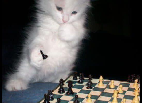 """If I move my pawn to d5, then you'd be forced to block with your rook, and I could check with my bishop...wait, just give me a minute here. (<a href=""""http://animalsthatdopeoplethings.tumblr.com/post/9253692427"""" data-ylk=""""slk:Via Animals Doing People Things"""" class=""""link rapid-noclick-resp"""">Via Animals Doing People Things</a>)"""