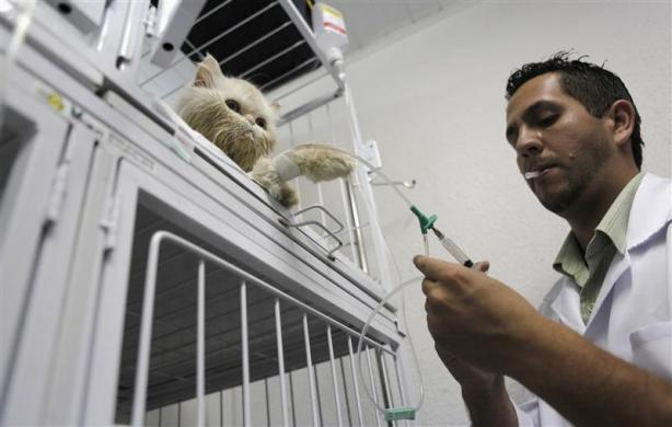 A veterinary assistant prepares give an injection of saline solution to a cat in the Anclivepa-SP veterinarian hospital in Sao Paulo August 22, 2012.