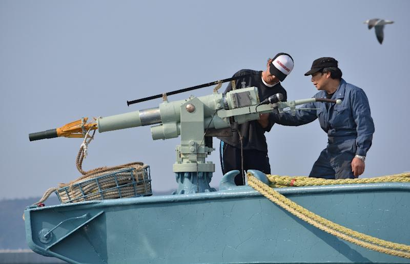 In this file photo taken on April 25, 2014 crew members of a whaling ship check a whaling gun or harpoon before departure at Ayukawa port in Ishinomaki City (AFP Photo/Kazuhiro NOGI)