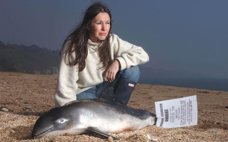 Campaigner Lindy Hingley at Slapton Sands with a rare infant porpoise that was washed up on the beach in a file picture - © Western Morning News / SWNS.com