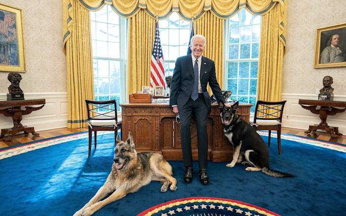Joe Biden with the family dogs Champ and Major in the Oval Office - Shalan Stewart/Avalon