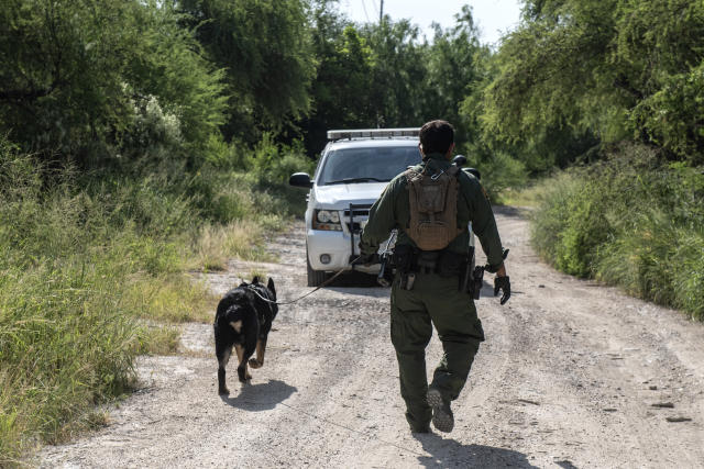 A Border Patrol K-9 unit searches the area for illegal immigrants near Mission, Texas, June 5, 2018. (Photo: Sergio Flores for Yahoo News)