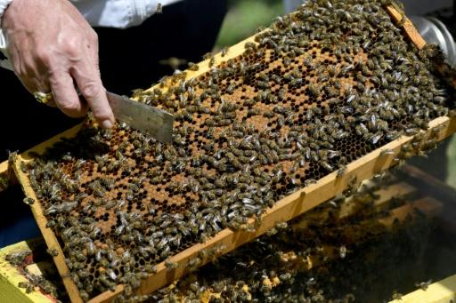 The Morava farm normally produces between five and 15 tonnes of honey a year