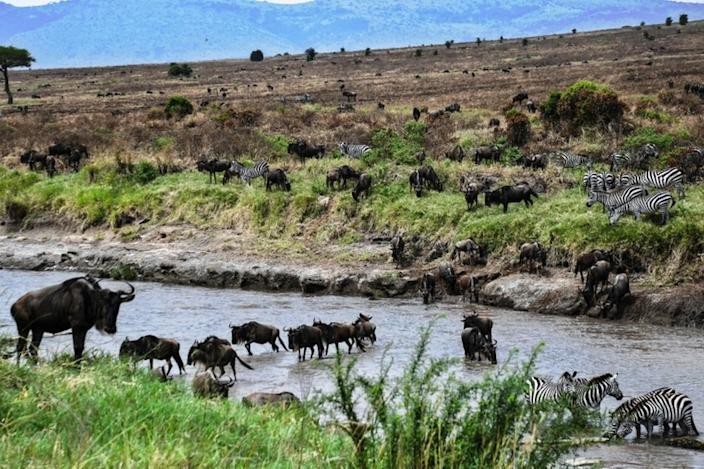 On the same day, herds of wildebeest and zebra arrive at Sand River in Tanzania's Serengeti before crossing the border into Kenya's Masai Mara in the annual Great Migration.