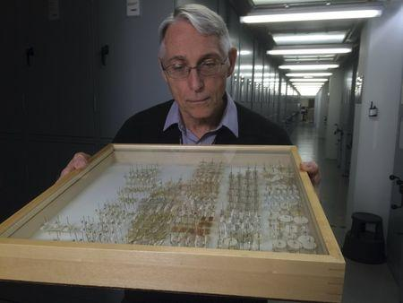 Ralph Harbach, an entomologist at London's National History Museum, poses as he examines preserved mosquitoes at the museum in London, Britain, March 10, 2016. REUTERS/Stuart McDill