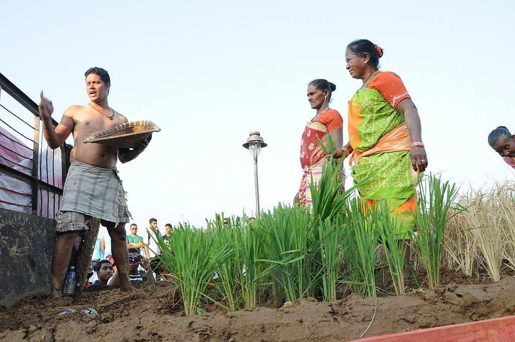 A float depicting the paddy fields of Goa. Rice is one of the biggest food crops produced in the state.